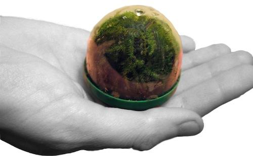 Pocket Biosphere by Vaughn Bell